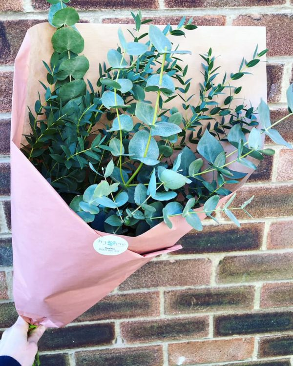 Bunch of Eucalyptus Stems